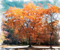 The #orange #tree ... #nature #ipad #woodstock