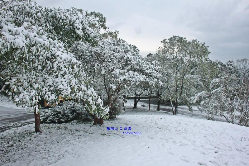 2016-台北陽明山-瑞雪-難得一見的雪白山景-17度C隨拍 (83)