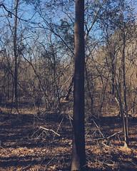 Swamp Screen