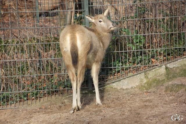 Zoo Berlin 31.01.20167