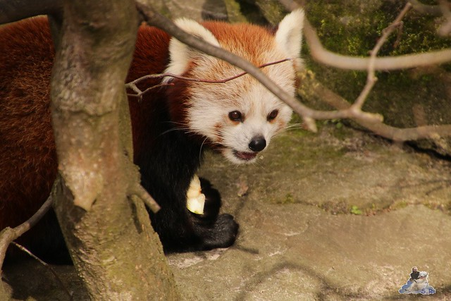 Tierpark Berlin 24.02.2016   200