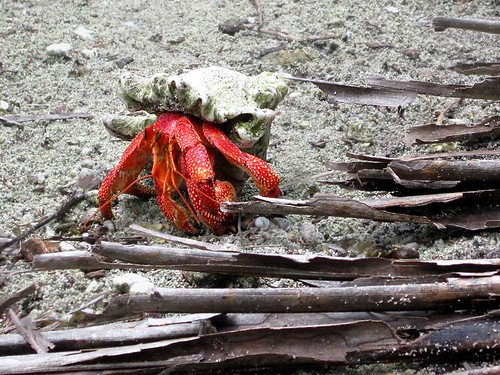 red island islands crab direction crabs hermit cocos keeling