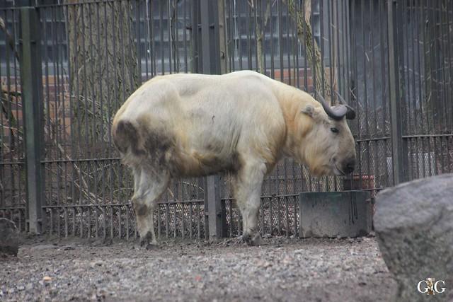 Besuch Tierpark Friedrichsfelde 14.02.201648