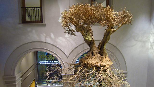 Il Mercato Del Duomo Milano - The olive tree by atist Adam Lowe