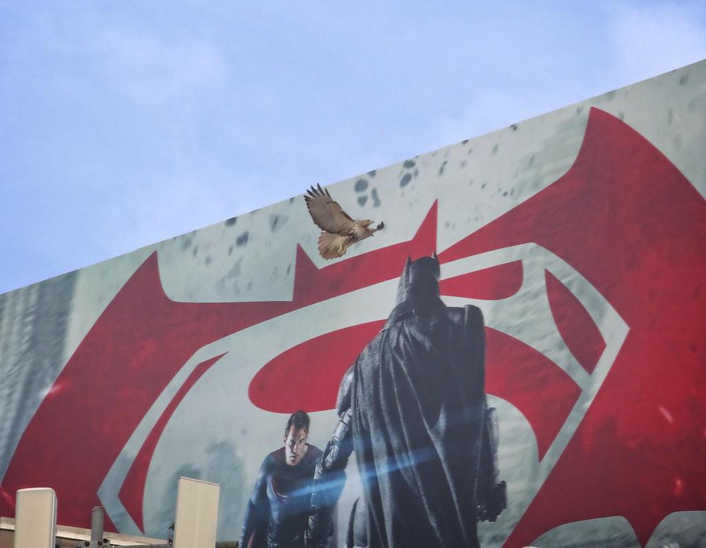 Superman vs Batman vs Hawk