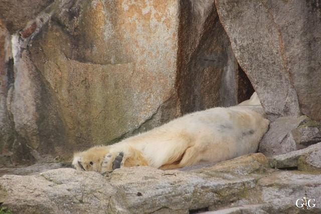 Frühlingstag im Zoo Berlin 03.04.201622