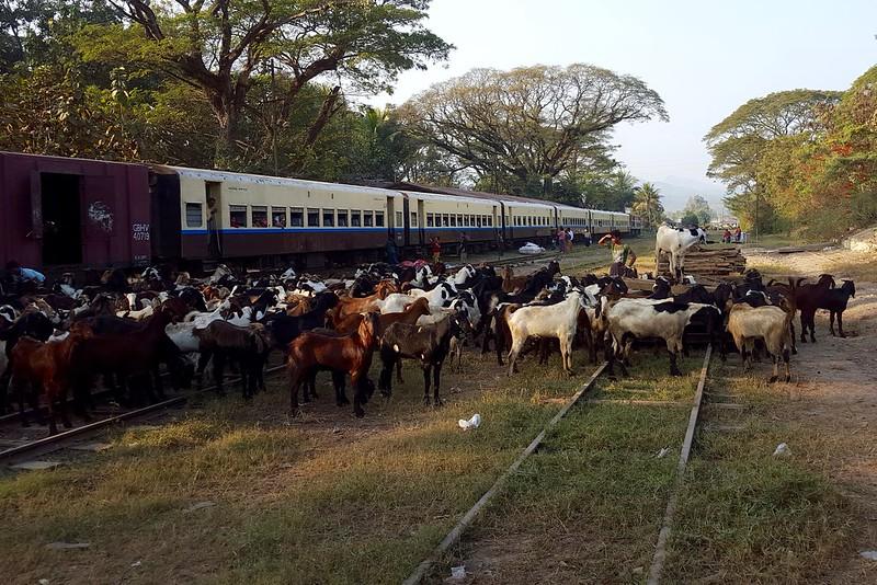Steigen gerade mehr Menschen oder Ziegen aus dem Zug?