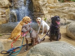 Kelly, Dutch, Cassie, and Riley taking a moment to be cute.