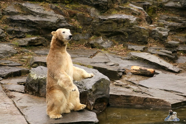 Tierpark Berlin 25.03.2016  033