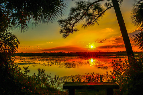 trees sunset usa sun nature spectacular landscape gold golden florida marsh jensenbeach hawksbluff