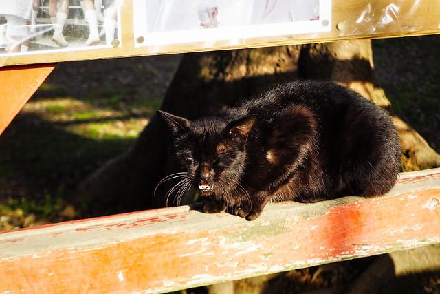 Today's Cat@2016-05-01