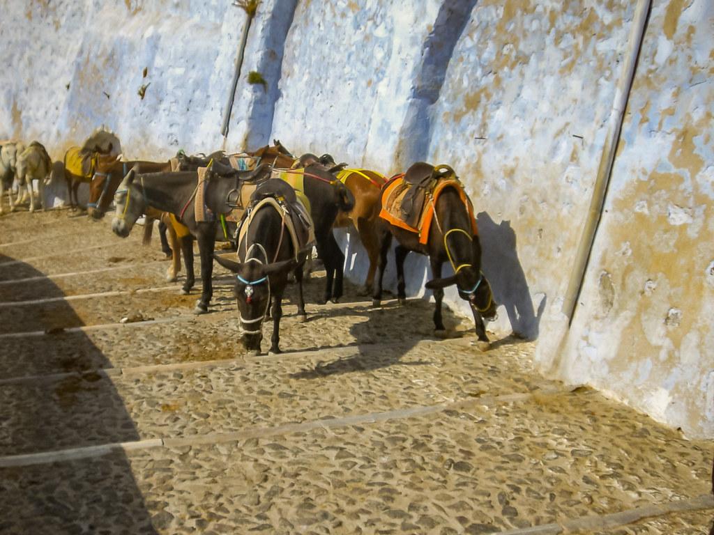 Santorin alter Hafen Esel donkey