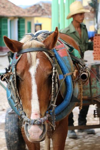 Horse drawn cart in Trinidad