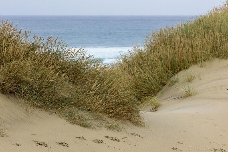 Sandfly Bay Dunes