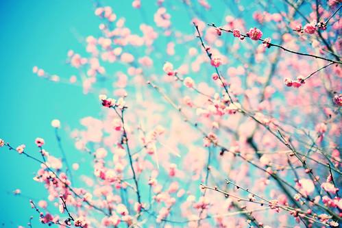 春へ出かけよう