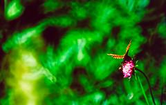 Butterfly 1994