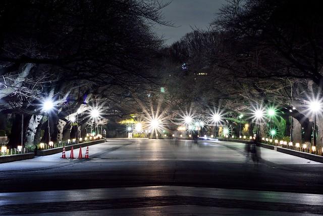 上野公園の夜景1