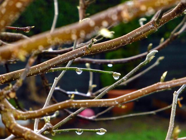Spring Drops