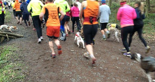 Wyre Forest parkrun dogs 13/02/2016