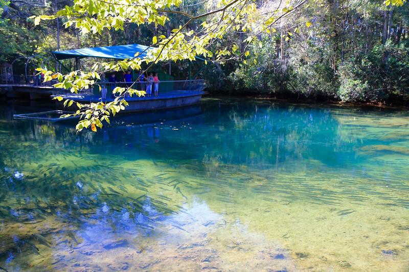 Homosassa Springs Wildlife State Park