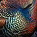 Wild Turkey by Steve Zamek