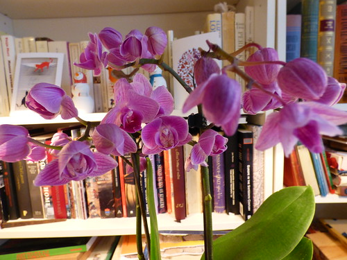 This orchid was bought on Jan 7, 2016