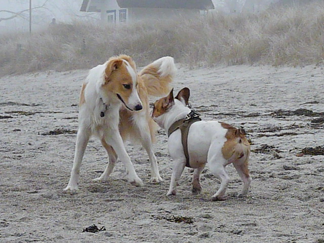 Playing Dogs