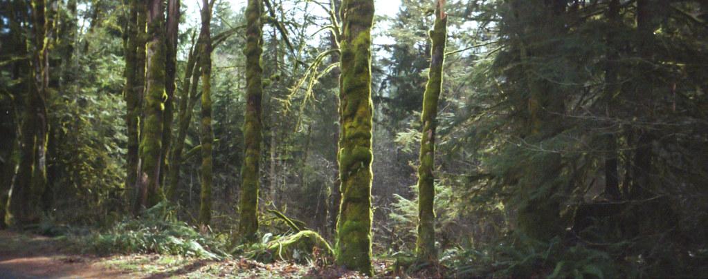 WildwoodTrees1