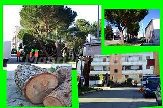 alberi tagliati casamassima ft Saliani