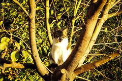 Today's Cat@2016-03-18