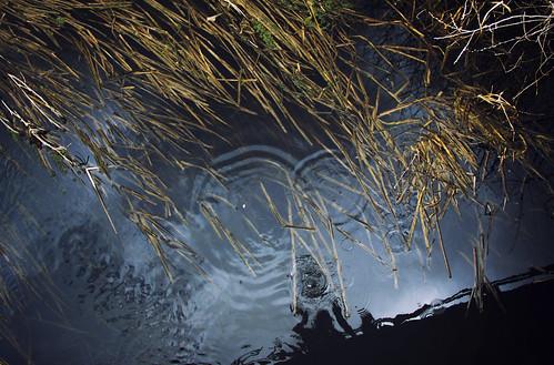 El regreso a la infancia en los arroyos