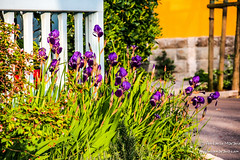 FLOWERS TRIESTE OM5