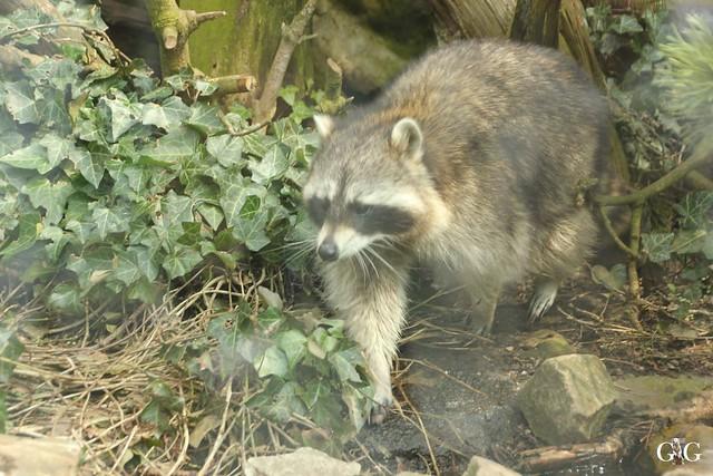 Zoo Bremerhaven 10.04.16 1.Teil86