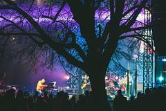 Tree Silhouette #120/365