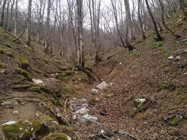 御池岳 コグルミ谷 登山道