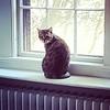 Gracie watches birds. #catsofinstagram #graciethecat