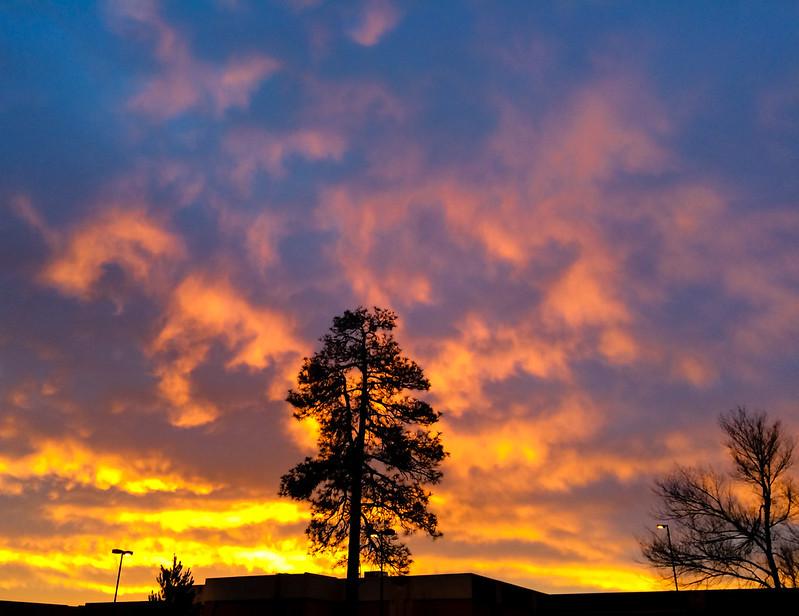 Winter Sunrise Pine Tree