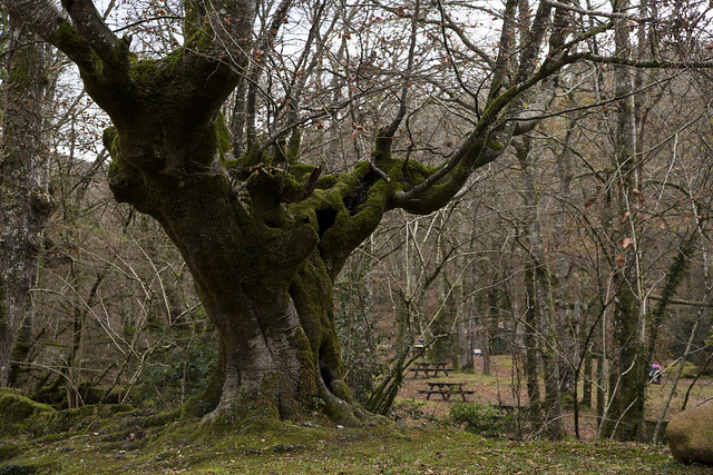 Reserva Saja, Cantabria
