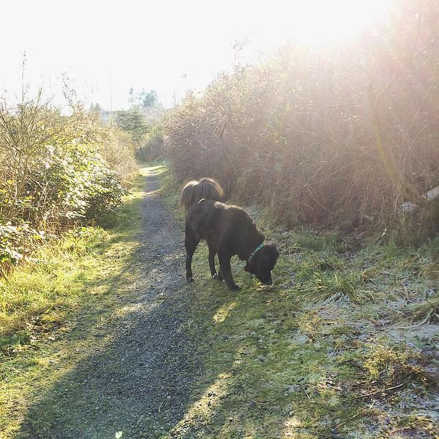 Bear Cub exploring on a crisp sunny morning.