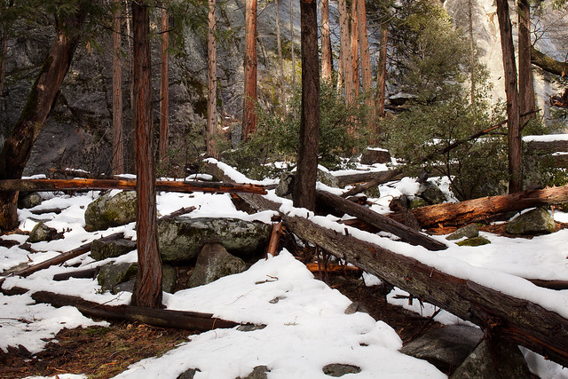Fallen, Standing, Snowy
