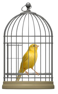 canary-in-birdcage