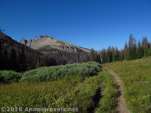On the trail into Bonneville Pass, Shoshone National Forest, Wyoming