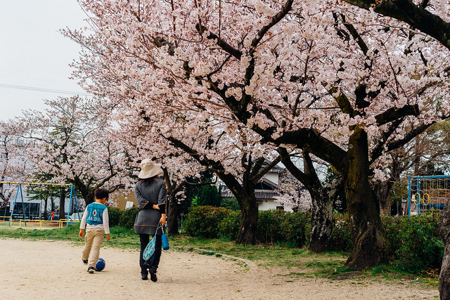 CherryBlossoms_104