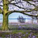Crocus meadow [Explore] by Fotokunst Susanne