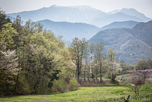 The spring landscape ,Shimp