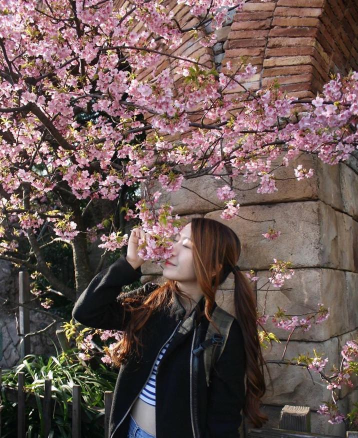 japan sakura jamie