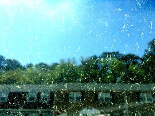 Pollen Vision (April 18 2015)
