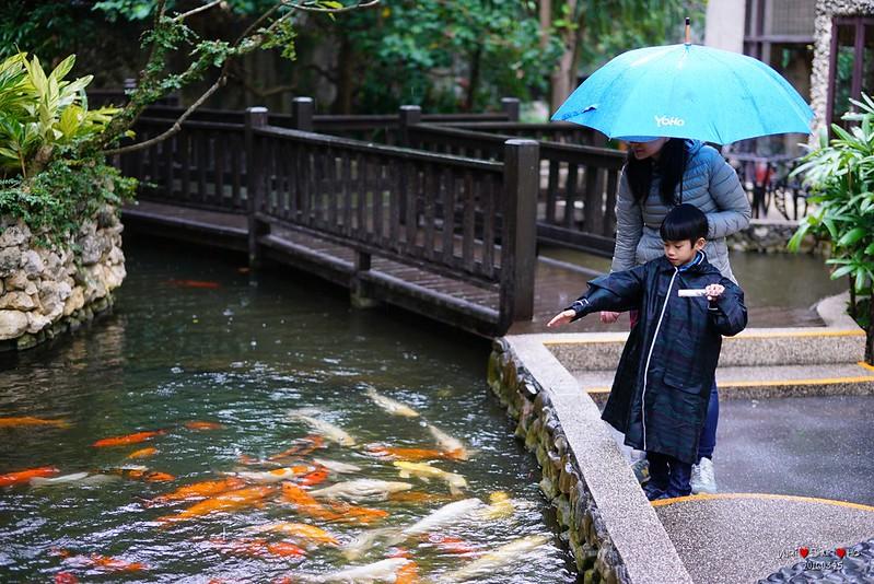 Fish feeding in rain