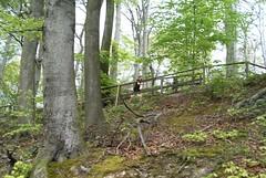1. Funtrail Gysenberg 2016 - Serpentinen 2