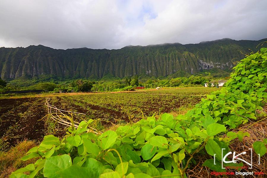 Hawaii_0230